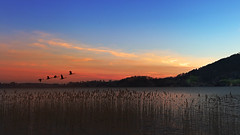 Morning on the lake. (joseph_donnelly) Tags: morning lake view mountains birds grass bayern bavaria germany sunrise sun sonnenaufgang see morgen