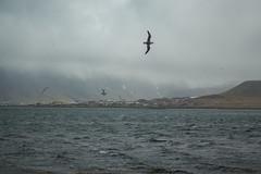 Kirkjufell 09 (sarahmonious) Tags: kirkjufell snfellsnespeninsula snfellsnes mountain churchmountain fog clouds ocean ringroad route1iceland route1 iceland iceland2016 traveling