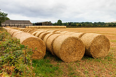 Waiting in line (Keith in Exeter) Tags: straw bales farm field stubble rural barn hedge devon england outdoor countryside landscape cylindrical round roll row haybalestubble