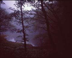 (bensn) Tags: mamiya 7ii 80mm f4 medium format film velvia 100 japan lake water trees fog