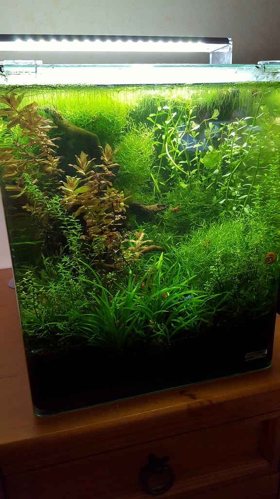 the world s newest photos of aquascaping and tank flickr hive mind