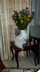 20160918_182825 (arizaalfredo) Tags: farieta sarria ines pedro blanca irene