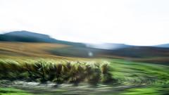 v i  e d a  II (creonte05) Tags: eduardomiranda explore nikon d7100 chile flickr exteriores color nature blur viedo 2016 naturaleza blurscape greenscene