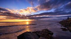 when a memory becomes a treasure (Bec .) Tags: whenamemorybecomesatreasure seagull inflight rocks bec canon 80d 1022mm henleybeach adelaide southaustralia light sunset beautiful shore sand sky sun
