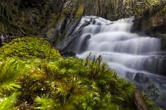 Pineapple Falls 4 (edgetas.com - tasview.com) Tags: hobart tasmania australia abcedge edgetas pineapplefalls mtwellington waterfall kunanyi 61