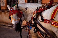 Siracusa (Massimo Frasson) Tags: italia italy sicilia siracusa centrostorico oldcity pittoresco barocco architetture strada street mezzoditrasporto cavallo carrettosiciliano decorazioni piazza turistico
