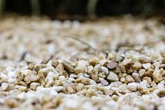 Low PoV - 2 (MFMarcelo) Tags: sopaulo brasil nature stone garden bokeh texture pov lowpov dof canon eos 5diii ef100mm profundidade