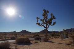 Early morning at Joshua Tree National park (annelaurem) Tags: joshuatree usa california joshuatreenationalpark sun blue sky desert sand rocks hills nationalpark