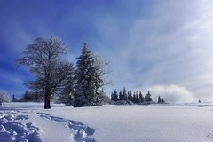 Winter in Alsace -4- (mamietherese1) Tags: nature expression alsace shining soe magicalmoments ourtime gpc exp
