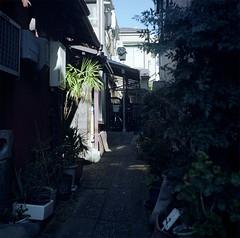 Superb Heliar (saito yoshihiko) Tags: tlr japan square tokyo superb kodak voigtlander squareformat voigtlnder heliar 75mm portra160