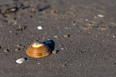 Shell (Jostein Nilsen Photography) Tags: pictures camera winter beach beautiful norway digital canon photography photo sand europe exposure raw image contest shell competition images shaddow best getty february scandinavia nilsen gettyimages sandisk vestfold jostein 2013 canoneos5dmarkii oddanesand 5dmk2 canon5dmarkii josteinnilsen lensblr photographersontumblr