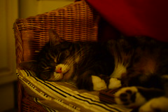 cat (eirelav s) Tags: pink sleeping cute cat nose chair tired wicker nico valerie statham valere sprod