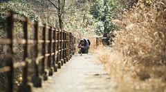 Concentrating (Lucas Shu) Tags: mountain nature beauty japan canon japanese photographer bokeh mark iii railway jr 5d kansai f28 hyogo 135mm 70200mm focusing takedao