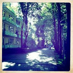 Platanen-Allee II (Casey Hugelfink) Tags: trees summer munich münchen alley neuperlach planttrees platanen