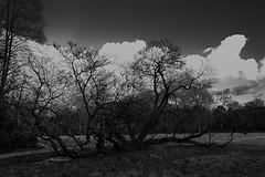 Weird tree (Nico De Muyt | Photography) Tags: park tree nikon boom nikkor nikond3200 d3200 vordenstein parkvordenstein nicodemuyt