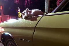 Fake Cat (Curtis Gregory Perry) Tags: lake chevrolet beer car night cat bottle nikon automobile long exposure fake chevelle chevy fender corona 1970 24mm oswego d300