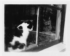 (theknark) Tags: blackandwhite cats film polaroid vintagecamera analogue outofreach instantfilm flickrfriday polaroidcolorpackii fujifilm3000b