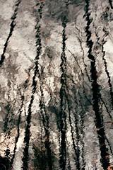 - (Paul WCKA) Tags: trees sky abstract cold reflection tree water contrast forest canon 1 spring wasser 14 4 himmel mm 50 kalt kontrast wald bume baum ef reflektion abstrakt frhling stamm 550d