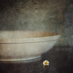 a little flower (silviaON) Tags: flower march bowl ie textured 2013 renquedochan visionqualitygroup magicunicornverybest magicunicornmasterpiece flypapertextures stilllifephotoart isabellafranceaction