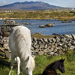 "Mary Folan's Ponies <a style=""margin-left:10px; font-size:0.8em;"" href=""http://www.flickr.com/photos/89335711@N00/8595629391/"" target=""_blank"">@flickr</a>"