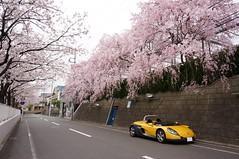 DSC02508-1 (macco) Tags: auto car sport japan cherry spider automobile blossom renault   sakura      renaultsportspider     sautevent    versautevent