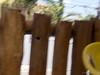 Title- , Caption- , File- 2013-01-19 14.12.58 Florianópolis 095.jpg (atramos) Tags: brazil mamangava insectinflight lightroom4 fieldunrated giantwildbee