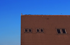 Irreverent birds (Meripihka) Tags: blue windows roof sky building birds architecture canon funny bright squares geometry blu sunny cielo canoneos quadrato rectangles pooping geometria irreverent 650d