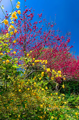 Colors of Spring (dfikar) Tags: park red sunlight plant flower tree green nature floral yellow garden outdoors dallas petals spring bush flora day branch bright blossom outdoor seasonal places foliage bloom april dogwood