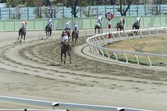20130405-_DSC5182 (Fomal Haut) Tags: horse japan nikon nagoya 80400mm d4   14teleconverter  d800e