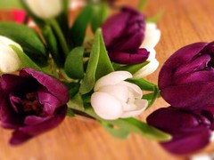 Seventy. Suffragette tulips (sarahjanequinn) Tags: flowers white green purple tulips iphone project365 uploaded:by=flickrmobile flickriosapp:filter=nofilter