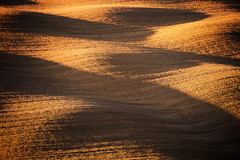 Tuscan Minimalism II (Philipp Klinger Photography) Tags: trip italien light sunset shadow vacation italy brown holiday abstract nature field bronze landscape evening nikon san europa europe italia waves shadows earth farm hill farming wave ground minimal hills soil dirt val clay tuscany crete land tele siena agriculture toscana valdorcia philipp wavy minimalistic rolling rollinghills agricultural d800 toskana cretesenesi dorcia klinger quirico sanquiricodorcia senesi dcdead nikond800