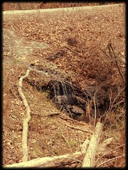Coopers Furnace (Chelsea_Rae1) Tags: water stream turbulence downslope uploaded:by=flickrmobile flickriosapp:filter=salamander salamanderfilter davidgarcheroverlook