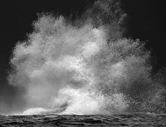 Whalesplash (evanffitzer) Tags: hawaii whale splash canon60d canoneos60d evanfitzer