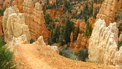 Bryce Amphitheater (Anomieus) Tags: brycecanyon sunsetpoint canyon view nature breathtaking hoodoos silentcity maze utah bryce colour landscape outdoor rockformation rock sunrisepoint rainbowpoint amphitheater neverstopexploring travel beautiful