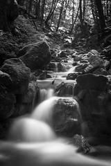The river (-Baptiste Coub-) Tags: baptistecoubronne d7100 forest chablais detail exposure exterrieur long nikon35mn outdoor river wow