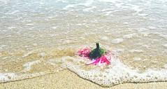 Bubbling Over Daisy (F.emme) Tags: beach huntingtonbeach pacificocean ocean seashore shore flower pink daisy flowerbutt mobile galaxynote3 samsung cellphone mobilephone phone