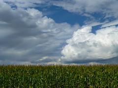 Corn and sky (plethora4834) Tags: windturbine field sky clouds corn