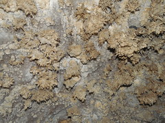 Frost Work Inside Timpanogos Cave (adventures_with_martin) Tags: frostwork cave speleothem
