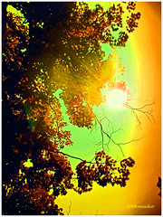 Peaceful Sun (Stephenie DeKouadio) Tags: canon photography outdoor sky sun tree trees branches branch painting artistic art abstractart abstract darkandlight light colour color colorful beautiful beauty