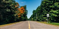 Just a splash of colour (emrold) Tags: cumberland kodakektar100 ottawa vsco vscofilm05 autumn blueskies colours green leaves orange road sign trees lensblr 2016ericdelorme|emrold photographersontumblr fujifilmx100s ontario canada ca