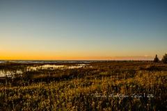 20160828-IMG_7757-WM (Pamela McLellan Zmija) Tags: pamelamclellanzmija saugeenshores portelgin sunset beach lakehuron goblesgrove sunshine