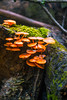 orange fungi (Shandi-lee) Tags: stephensgulch bowmanville ontario canada wilderness nature natural light trees fungi spiderweb leaf leaves autumn summer fall orange red green blue black brown naturallight 35mm canon7d shandileecox shandileephoto shandileephotography shandilee shandileee instagram love shandi lee cox 2016 september