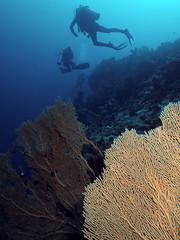 gorgone-1 (penelope64) Tags: mer canon dive egypte plongée merrouge gorgone 2013 croisièrenordépaves