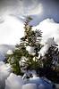 (Rachel Citron) Tags: christmas tree nemo gothamist unionsquare blizzard curbed snowscape thelocal thenewyorktimes buriedinsnow concretejungle timeoutnewyork newyorkmagazine nymag timeoutny newyorkmag thenytimes thelocaleastvillage