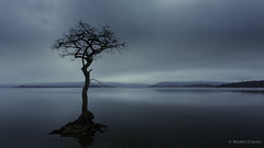 Milarrochy Bay (Mario Cugini) Tags: longexposure sunset lake reflection tree landscape scotland still blues peaceful lonely trossachs lochlomond isolated milarrochybay