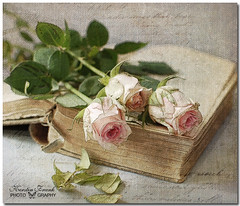 .. just roses .. (Kerstin Frank art) Tags: roses texture leaves brushes oldbook pinkroses magicunicornverybest kerstinfrankart kerstinfranktexture creativephotocafe