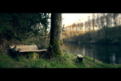 Evening Walk (Sam Finch) Tags: life new blackandwhite panorama white black colour tree love film water speed forest photoshop 35mm canon river bench movie landscape 50mm prime golden evening countryside screenshot still nikon stream slow shot stitch tea bokeh cut walk smoke country snapshot picture x calm best example final shade crop frame hate sit transparency shutter pro letterbox dslr 18 tone tutorial fcp prine d7100