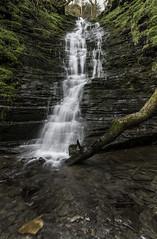 Water-Breaks-Its-Neck 2 (Stuart Gennery Photography) Tags: plants tree water waterfall moss log rocks pebbles falling flowing slate cascade midwales newradnor waterbreaksitsneck