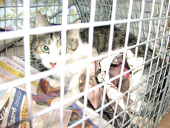 Cat Colony Trap and Release - Evelyn (strib10024) Tags: feralcatcolony nyccats upperwestsidecats