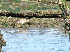 Elkhorn Slough Safari (SeeMonterey) Tags: safari montereycounty sealion seaotter harborseal elkhornslough mosslanding